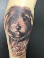 Hund  Tätowierung  - Tattoo